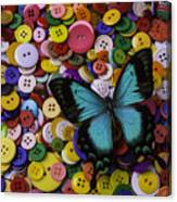 Butterfly On Buttons Canvas Print