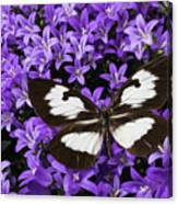 Butterfly On Campanula Get Mee Canvas Print