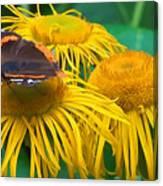 Butterfly On Chrysanthemum Flowers Canvas Print