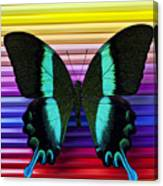 Butterfly On Colored Pencils Canvas Print