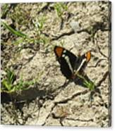 Butterfly On Cracked Ground Canvas Print