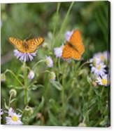 Butterfly On Fleabane #2 Canvas Print