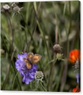 Butterfly On Flower. Canvas Print