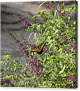 Butterfly On Flowers Canvas Print