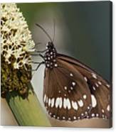 Butterfly On Grass Tree Flowers Canvas Print