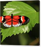 Butterfly On Large Leaf Canvas Print