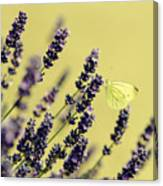 Butterfly On Lavender Flowers Canvas Print
