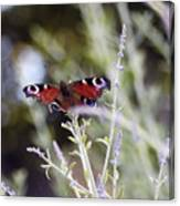 Butterfly On Lavender Canvas Print