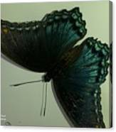 Butterfly On My Car Canvas Print