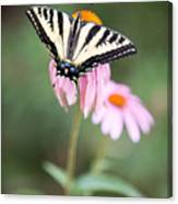 Butterfly On Pink Cone Flower Canvas Print