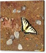 Butterfly On The Beach Canvas Print