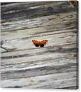 Butterfly On The Dock Canvas Print