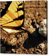Butterfly On The Rocks Canvas Print