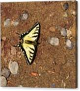 Butterfly On The Sand Two  Canvas Print