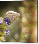 Butterfly On The Spot Canvas Print