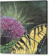 Butterfly On Thistle 2010 Canvas Print