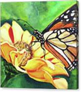 Butterfly On Yellow Daisy Canvas Print