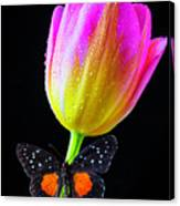 Butterfly On Yellow Pink Tulip Canvas Print