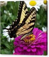 Butterfly On Zennia Canvas Print