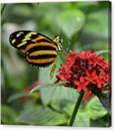 Butterfly Orange And Yellow Canvas Print