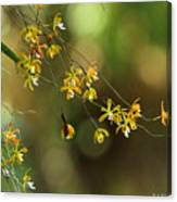 Butterfly Orchid Canvas Print