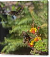Butterfly Pas De Deux Canvas Print