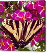 Swallowtail Butterfly Pink Canvas Print
