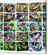 Butterfly Plethora I Canvas Print