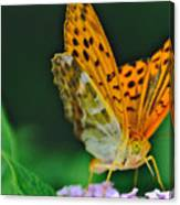 Butterfly Pose Canvas Print