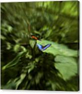 Butterfly Race Canvas Print