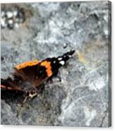 Butterfly Resting Canvas Print