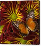 Butterfly Resting On Chrysanthemums Canvas Print