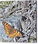 Butterfly Rock Canvas Print