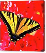 Butterfly Series #11 Canvas Print
