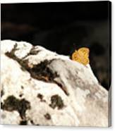 Butterfly Standing On Rock Canvas Print