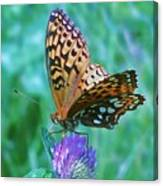 Butterfly Stare Canvas Print