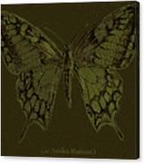 Butterfly Swallow Tail Canvas Print