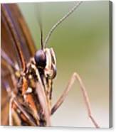 Butterfly Tongue Canvas Print