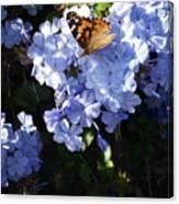 Butterfly V Canvas Print