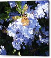 Butterfly Viii Canvas Print