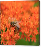 Butterfly Weed Heaven Canvas Print