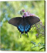 Butterfly Wish 1 Canvas Print