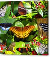 Butterfly Work 10 Canvas Print