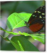 Butterfly1 Canvas Print