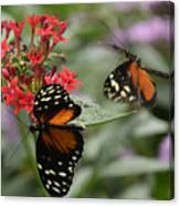 Butterfly2 Canvas Print