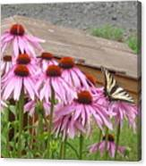 Butterfly's Lunch Canvas Print