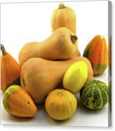 Butternut Squash With Gourds  Canvas Print