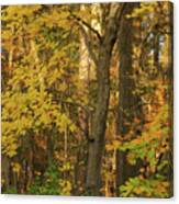 Butterscotch Autumn Canvas Print