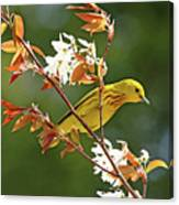 Buttery Yellow Warbler Canvas Print