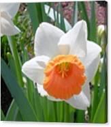Button Daffodil Canvas Print